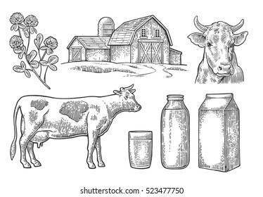 Set Milk farm. Cow head, clover, box carton package, glass and bottle. Vector engraving vintage black illustration. Isolated on white background.
