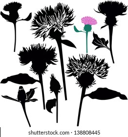 Set Milk thistle flowers isolated on white background