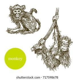Set of monkey. Vector illustration.