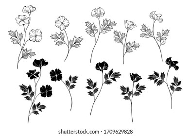Set of Monochome (black and white) flowers California Poppy on isolated background.
