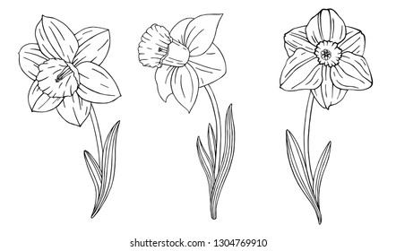 Set of monochrome decorative flower Narcissus. Vector floral template for decorating greeting cards, coloring books, art therapy, anti stress, print for t-shirt and textile.