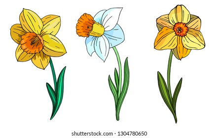 Set of multicolor decorative flower Narcissus. Vector floral template for decorating greeting cards, coloring books, art therapy, anti stress, print for t-shirt and textile.