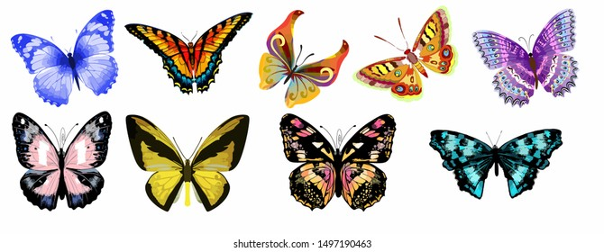 Set of multi-colored butterflies in isolate on a white background. Vector illustration