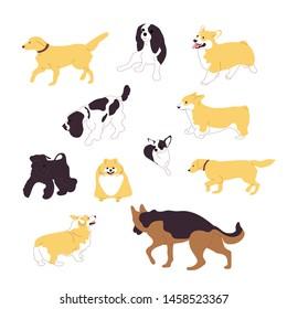 Set of multiple breed walking and sitting dogs, corgi, retriever, shepherd, terrier, spaniel, chihuahua,pomeranian. Isolated on white background. Flat style cartoon stock vector illustration.