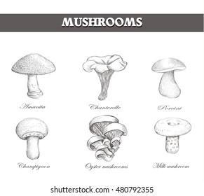 set mushroom sketch vector eps pic style illustration image