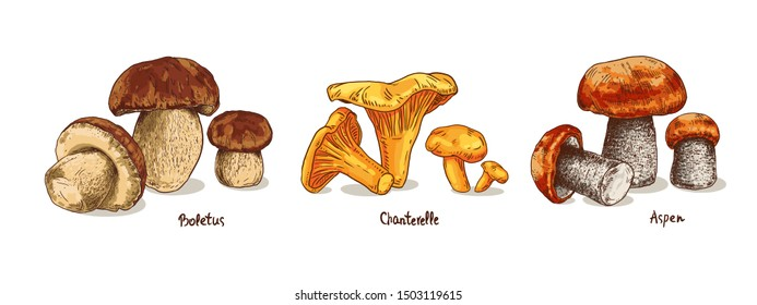 Set mushrooms hand drawn colorful vector illustration. Sketch food drawing isolated on white background. Chanterelle, boletus, aspen mushroom.