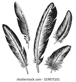 The set of natural feather bird, hand drawn vector illustration.