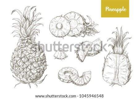 set naturalistic drawings whole cut pineapples stock vector royalty