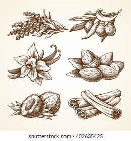 Set with nature elements herbal illustrations. Sketch vector illustration. essential oil spices collection: cinnamon, olive, vanilla, almond, coconut, lavender. Ayurveda medicine