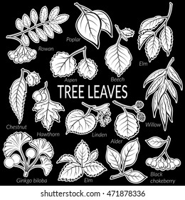 Set of Nature Pictograms, Tree Leaves, Willow, Hawthorn, Poplar, Aspen, Ginkgo Biloba, Elm, Alder, Linden, Rowan, Chestnut, Black Chokeberry and Beech. White on Black Background. Vector
