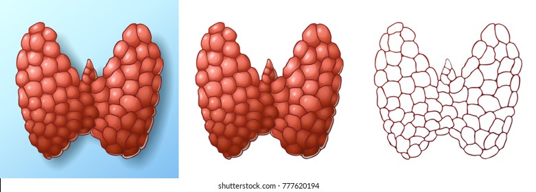 Set of normal healthy pink thyroid gland colorful and shadow on blue and isolated on white and red contour line. A realistic vector illustration.