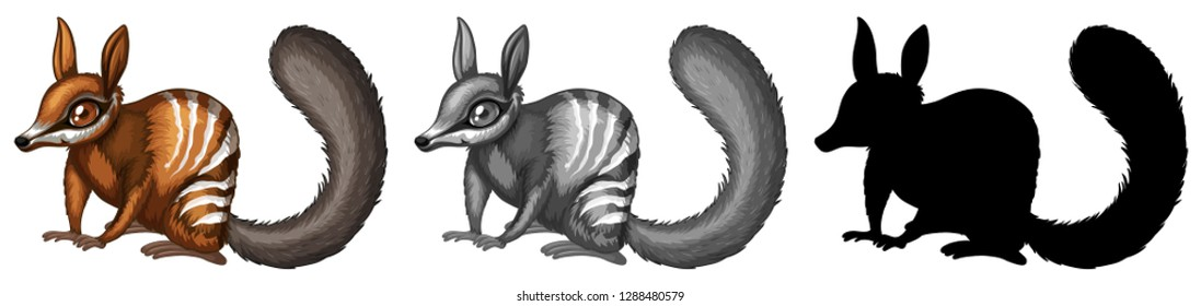 Set of numbat character illustration