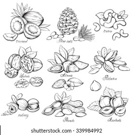 Set of nuts. Hand drawn sketches vector illustration on white background in vintage style.
