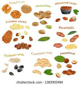 Set of nuts isolated on white background. Peanuts, cashews, hazelnuts, walnuts, sunflower seeds, almonds, pistachios and cedar nuts close-up Vector illustration.