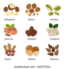 The set of nuts : Macadamia, Pistachio, Walnut, Brazil nut, Bread nut, Candle nut, Peanut, Hazelnut, Beechnut, isolated on white background illustration, vector.