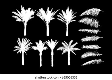 Set Object tracing palm tree. Vector