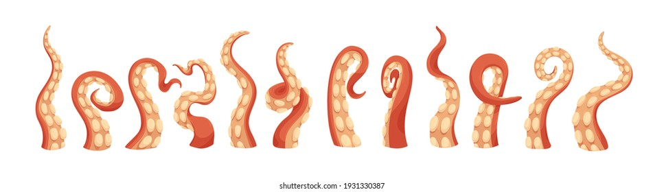 Set of octopus tentacles with suckers. Twisted long limbs of sea or ocean monsters. Arms of aquatic Kraken isolated on white background. Colored flat vector illustration of marine animal