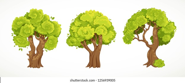Set of old thick trees with summer or spring green foliage vector drawing isolated on white background