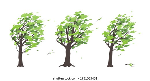 Set of old trees with dark trunks and green leaves isolated on white background. Deciduous tree in blowing wind, windy weather, plants during a storm. Simple vector illustration in flat cartoon style.