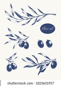 Set of olive branches. Vector engraving food illustration.