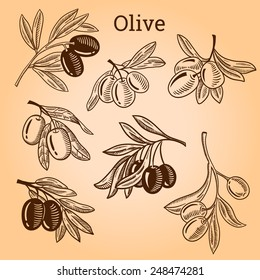 Set of olive tree branch. Engraving hand drawn style. Vector sketch
