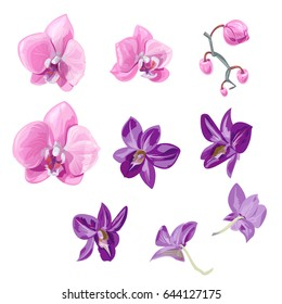 Set orchid flowers (Phalaenopsis, Dendrobium), pink, purple flowers, buds, tropical plants on white background, digital draw, realistic vector botanical illustration for design