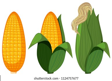 A Set of Organic Corn illustration