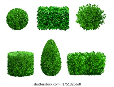 Set of ornamental plants and trees for landscaping