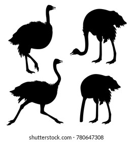 Set of ostrich silhouettes . Vector illustration isolated on the white background
