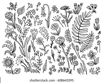 Set of outline doodle plants, herbs and flowers: rose, chamomile, iris, fern, oak leaf, lily, dill, tulip, sunflower, may-lily, dandelion. Black and white hand-drawn ink graphics. Vector illustration.