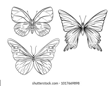 Set of  outline images of a butterfly. Outline drawing. Stock vector illustration.