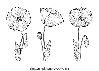 Set of outline poppies. Vector hand-drawn illustration in line art style. Sketches of spring flowers. Perfect for your projects, cards, invitations, print, decor, patterns, packaging design.