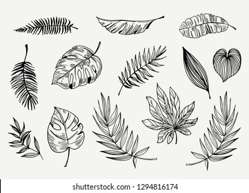 Outline Tropical Leaves Images Stock Photos Vectors Shutterstock Tropical leaf border, nature summer frames and luxury palm leaves borders vector design background. https www shutterstock com image vector set outline tropical leaves hand drawn 1294816174