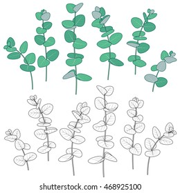 Set of outlined  and green  Eucalyptus  branches  with round leaves  isolated on white. Colored and monochrome botanical elements.