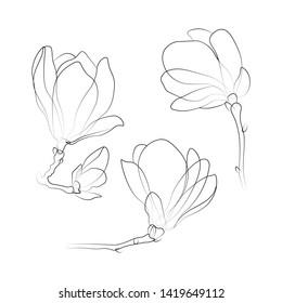 Set of outlined magnolia flowers. Black line sketch on white background. Vector illustration