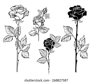 Set of painted art, contour roses on white background.