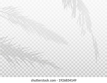 Set of palm leaf shadows isolated on transparent background. Mockup. Natural lighting silhouette. EPS10.