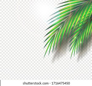 Set of palm leaves and exotic plants. Copy space vector graphic green jungle and tropics on a transparent background. Symbolizes a trip in good weather in the summer.