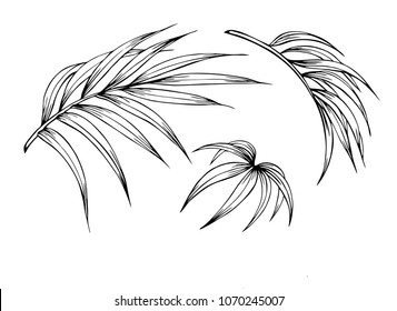 Palm Leaves Clipart Images Stock Photos Vectors Shutterstock 30000 flower clipart black and white free download. https www shutterstock com image vector set palm leaves outline black white 1070245007