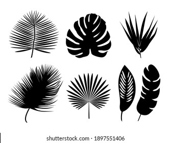 Set of palm leaves silhouette. Isolated on white design vector element set.