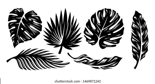 Set of palm leaves silhouettes isolated on white background. - Vector