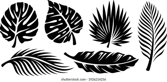 Set of palm leaves silhouettes isolated on white background. Vector EPS10 - Vector