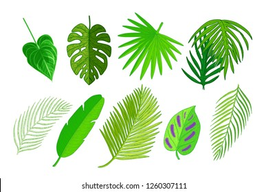 Set of palm leaves. Tropical plants and palm tree leaf isolated on white background.