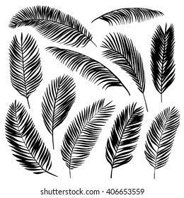 Set of palm leaves. Vector illustration.