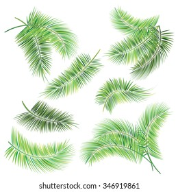 Set of palm tree branches on white background. Vector illustration.