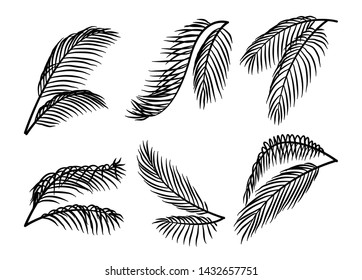 Set of palm tree leaves silhouettes in different styles. coconut leaf vector illustration.