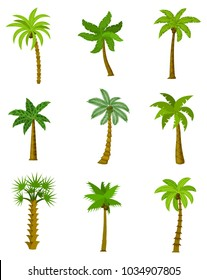 Set of palm trees isolated on white background, vector illustration