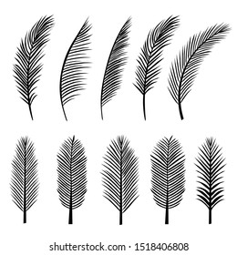 Set Of Palm Trees Leaves Silhouette Tropical Nature. Vector illustration Black isolated on white background. Illustration In Nature Style. For Web Banners, Posters, Cards, Wallpapers.