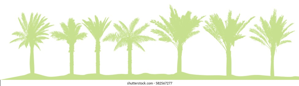 Set palm trees. Vector