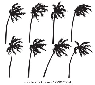 Set of palm trees in wind storm isolated on white background. Black silhouettes of trees in wind. Tropical landscape element design. Monochrome simple plants vector flat illustration.